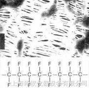 德國Sartorius聚四氟乙烯濾膜 (PTFE)